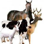 Коровы, козы, лошади, олени