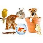 Зоотовары: товары для животных