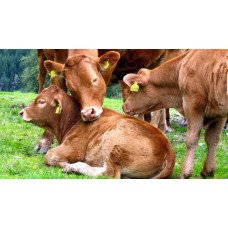 Большой выбор бирок для маркировки животных