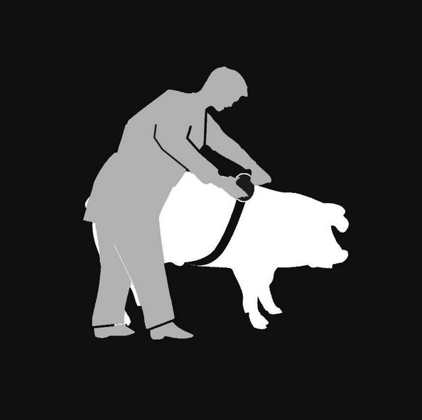 Обмер свиней
